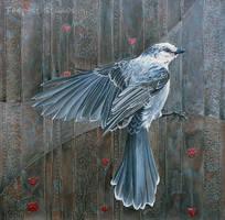 Canada Grey Jay Vivace by TempestErika