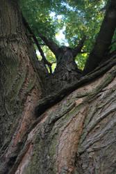 I Climbed a Tree to See the World by mkmkmkzzzz