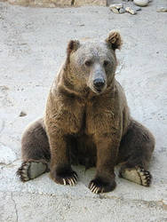 Bear by Uzelena