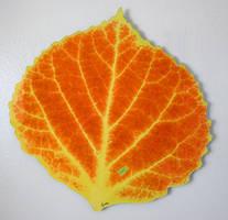 Aspen Leaf 1 by AgustinGoba