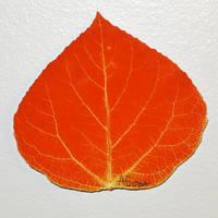 Small Red Aspen Leaf #1 by AgustinGoba