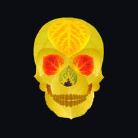 Aspen Leaf Skull 4 Black by AgustinGoba