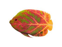 Aspen Leaf Tropical Fish 1 by AgustinGoba