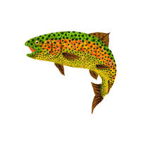 Aspen Leaf Rainbow Trout 1 by AgustinGoba