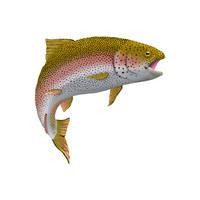 Rainbow Trout 1 by AgustinGoba