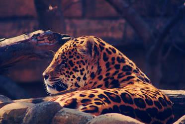 Jaguaro B by tiganesc