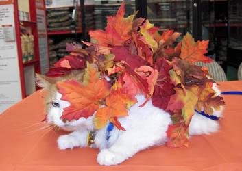 Pile of Leaves goes PEEK by TNHawke