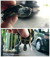 Turtle by loantruong