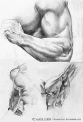 Sketchy/Studies by Thundertori