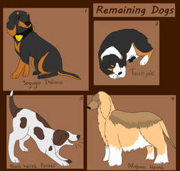 Remaining Dogs for Adoption [2/4 OPEN] by Aspen-Animal-Shelter