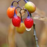 Petits Fruits en Novembre VII by hyneige