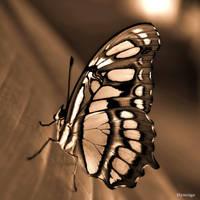 Papillon en Orange de Lumiere by hyneige
