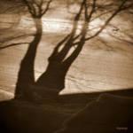 Les ombres de l'hiver. by hyneige