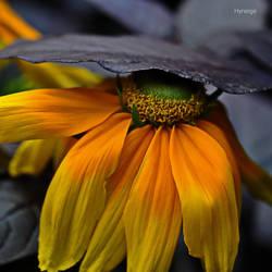 En jaune abrite by hyneige