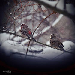 Oiseau tempete I by hyneige