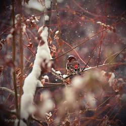 Oiseau tempete II by hyneige