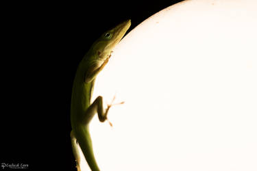 Green anole out-of-bounds by CyclicalCore