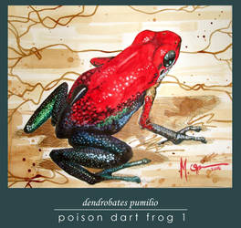 Poison Dart Frog 1 by markeee