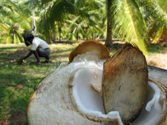Coconut paradise in India by szymonomyzs