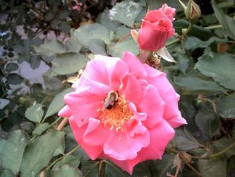 A Bee's Breakfast by ShiningamiMaxwell