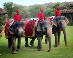 Elephant Polo by emshore