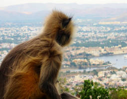 Pensive Monkey by emshore