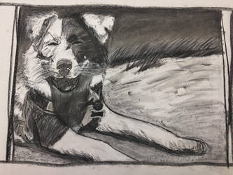 Beach Pup by xXArtimisXx