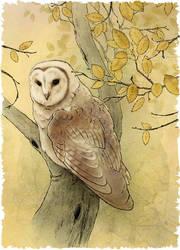 Barn Owl by Mikadze