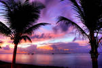 Morning Glory by oO-Rein-Oo