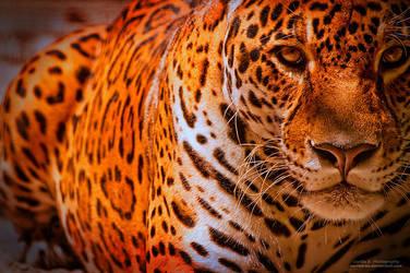 Panthera Onca by oO-Rein-Oo