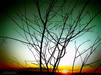 Amber Evening Sun by oO-Rein-Oo