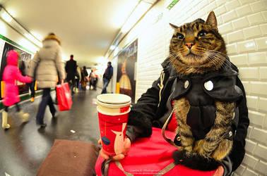 Mr. Beggar Feline by oO-Rein-Oo