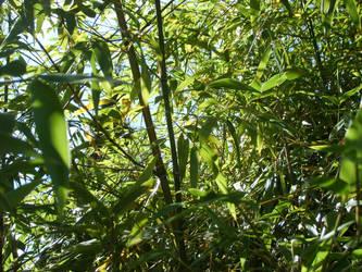 Bamboooo by rd80770