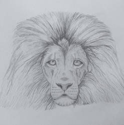 Lion by frantastic-scribbles