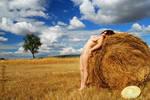 Alentejo hay fields III by PeterLime