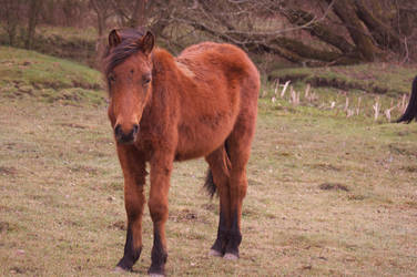 new Forest Foal Stock. by LubelleCreativeSpark