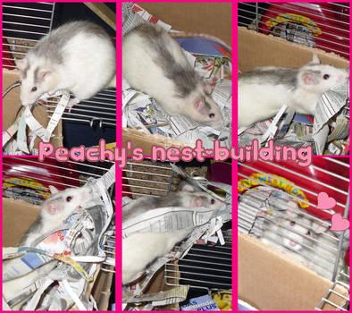 Peachy's nest-building by Sorayachi