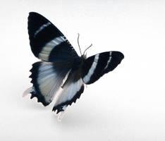 butterfly by ZergSTOCK