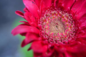Flower by T-CheyPhotography