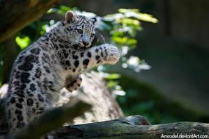 Snow Leopard Cub II by amrodel