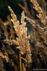 Dry Grass by amrodel