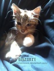 Happy days kitty by Sharmrocx