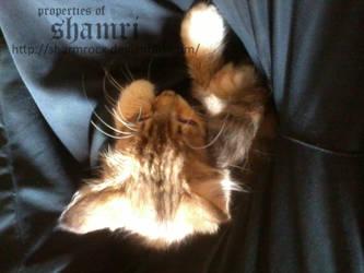 Happy days kitty 2 by Sharmrocx