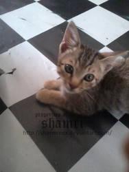 Happy days kitty 3 by Sharmrocx