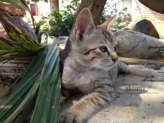 Kitty kitty kitty 3 by Sharmrocx