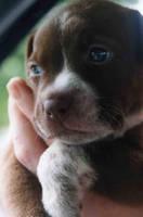 puppy by josepimorgan