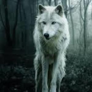 ForsakenHellhound's Profile Picture