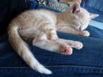 cream coloured kitten by Leopard-Enya