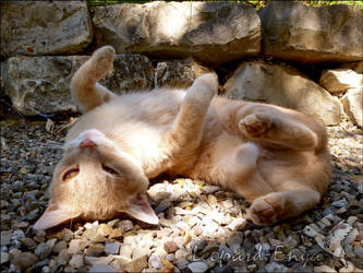 Can you rub my belly plz? by Leopard-Enya