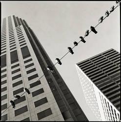 birds by fuckeymouse